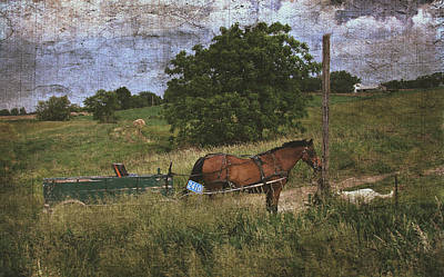 Amish Horse Waits With Dog Poster by Cassie Peters