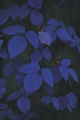 Among The Blue Leaves Poster by Tom York Images