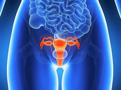 Anatomy Of Human Uterus Poster by Sebastian Kaulitzki