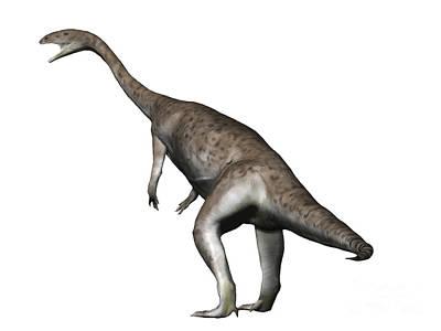 Anchisaurus Dinosaur Poster by Nobumichi Tamura
