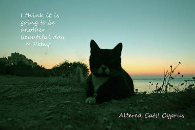 Another Beautiful Day Altered Cats Cyprus Poster by Anita Dale Livaditis