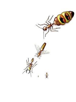 Ant Castes Poster by Claus Lunau