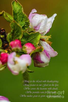 Apple Blossom Raindrops Poster by Thomas R Fletcher