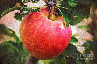 Apple On The Tree Poster by Andee Design