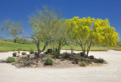 Arizona Desert Golf Landscape Poster by Sheldon Kralstein