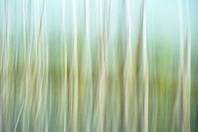 Artistic Abstract Of Trees Poster by Rona Schwarz