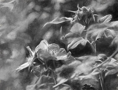 artistic painterly Black and white monochromatic two dogroses summer 2014 Poster by Leif Sohlman