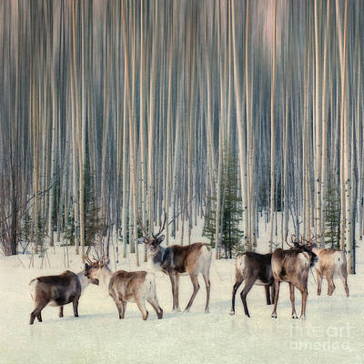 Caribou And Trees Poster by Priska Wettstein