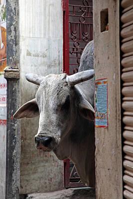 Asia, India, Varanasi Poster by Kymri Wilt
