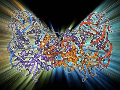 Aspartyl-trna Synthetase Molecule Poster by Laguna Design