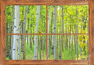 Aspen Tree Forest Autumn Picture Window Frame View  Poster by James BO  Insogna