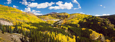 Aspen Trees On A Mountain, San Juan Poster by Panoramic Images