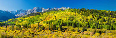 Aspen Trees On Mountains, Uncompahgre Poster by Panoramic Images