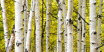 Aspens Poster by Chad Dutson