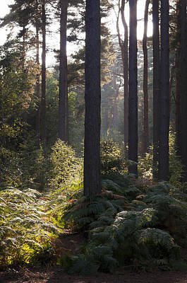 Aspley Woods Poster by David Isaacson