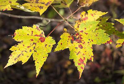 Autumn Begins Poster by Mariola Szeliga