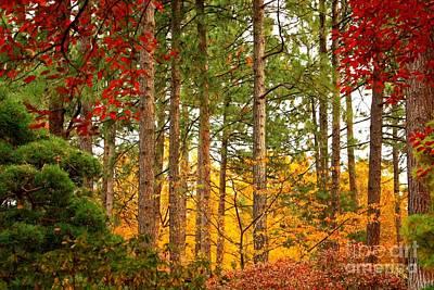 Autumn Canvas Poster by Carol Groenen