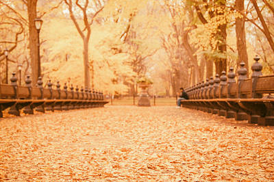 Autumn - Central Park Elm Trees - New York City Poster by Vivienne Gucwa