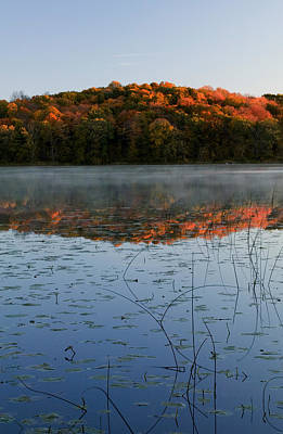 Autumn Color Forest Reflected In Grass Poster by Panoramic Images