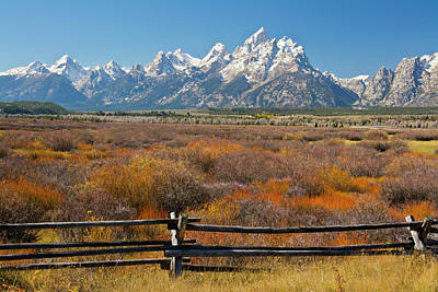 Autumn Color, Grand Tetons, Buck Poster by Michel Hersen