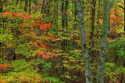 Autumn Color In Brown County State Poster by Chuck Haney