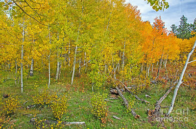Autumn Color Poster by Baywest Imaging