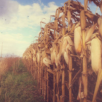 Autumn Corn Field Poster by Joy StClaire