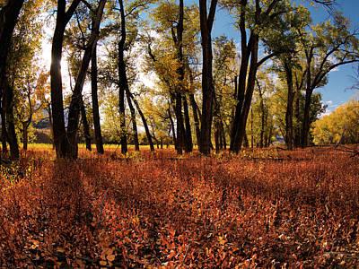Autumn Cottonwood Sanctuary Poster by Leland D Howard