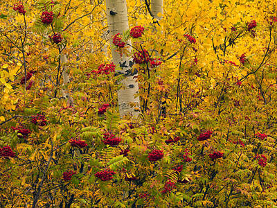 Autumn Forest Colors Poster by Leland D Howard