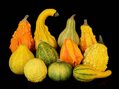 Autumn Harvest Gourds Poster by Jim Hughes