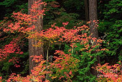 Autumn In Mount Rainier Forest Poster by Inge Johnsson