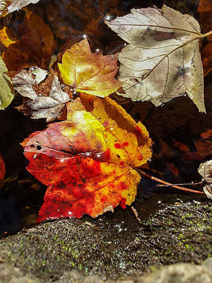 Autumn Leaves On Water Poster by Kirkodd Photography Of New England