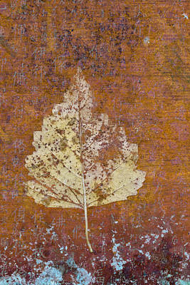 Autumn Leaf On Copper Poster by Carol Leigh