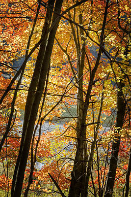 Autumn Light Poster by Barbara Smith