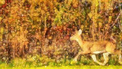 Autumn Light Deer In Forest Poster by Dan Sproul