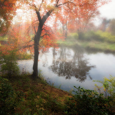 Autumn Maple Tree Poster by Bill Wakeley