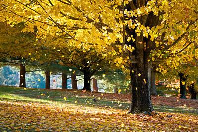 Autumn Maple Tree Fall Foliage - Wonderland Poster by Dave Allen