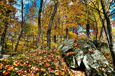 Autumn On The Rocks Poster by David Patterson