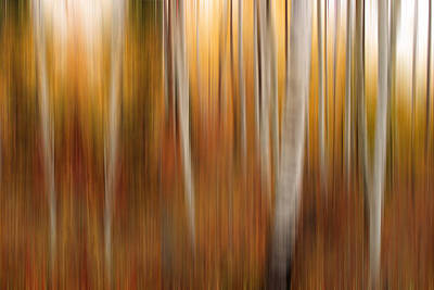 Autumn Quakies Impressionistic Poster by TL  Mair