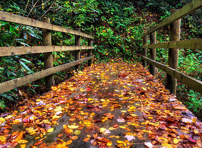 Autumn Rain At Joyce Kilmer Memorial Forest Poster by Greg Mimbs