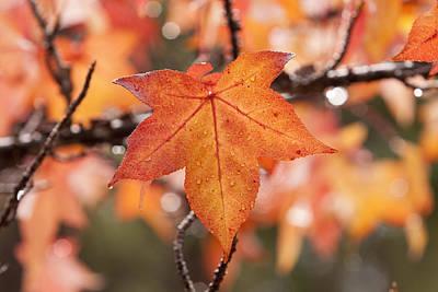 Autumn Rain Poster by Michelle Wrighton