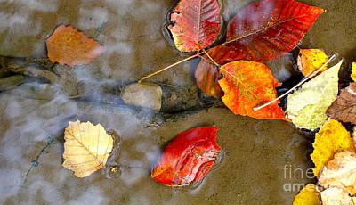 Autumn Ripples Poster by Robin Erisman