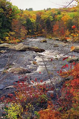 Autumn River Poster by Joann Vitali