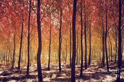 Autumn Scenic Poster by Carlos Caetano