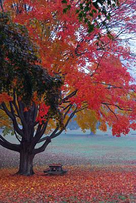 Autumn Splendor Poster by Lisa Phillips
