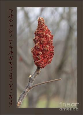 Autumn Sumac  Thanksgiving Greeting Card #1 Poster by Andrew Govan Dantzler
