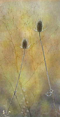 Autumn Teasel Poster by Angie Vogel