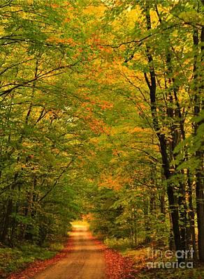 Autumn Tree Tunnel Poster by Terri Gostola