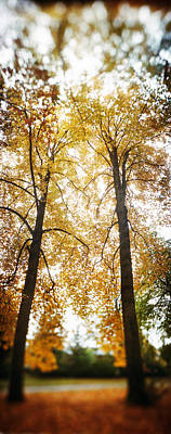 Autumn Trees In A Park, Volunteer Park Poster by Panoramic Images
