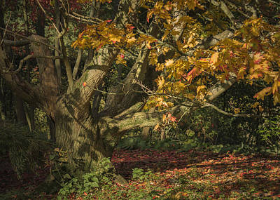 Autumn Woodland Poster by Chris Fletcher